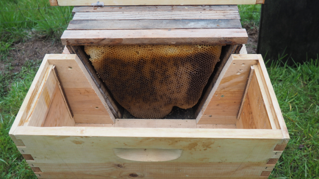 Charmant Front View Showing Nuc Cut To Line Up With Front End Of Top Bar Hive